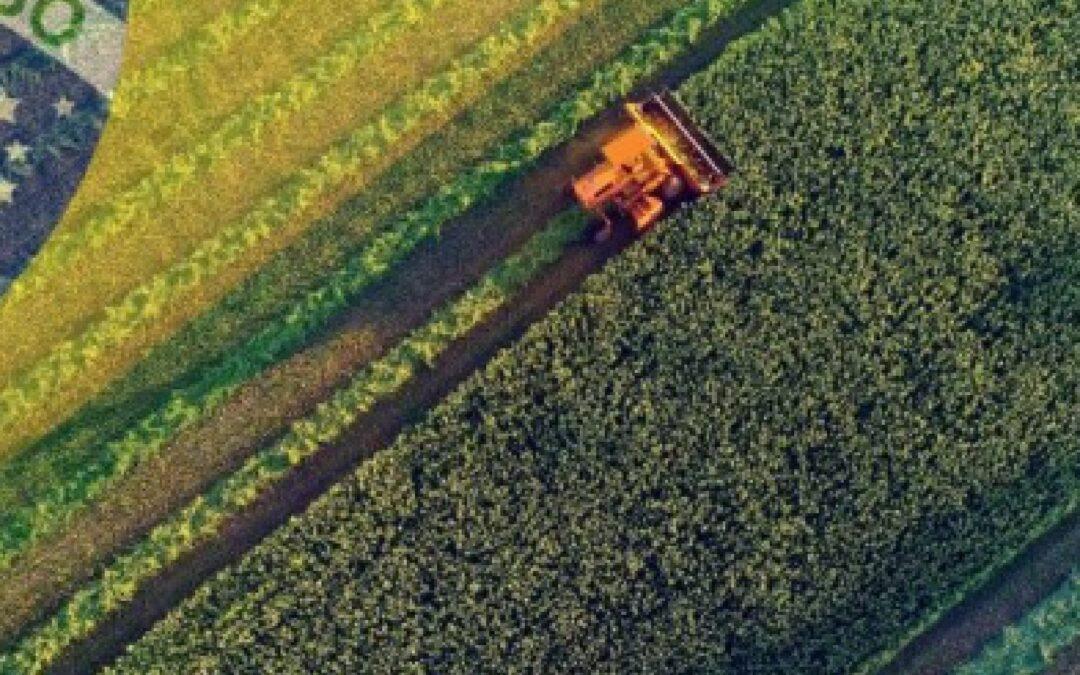 ¿A dónde va Brasil para el 2040 en materia granaria? Implicancias para Argentina
